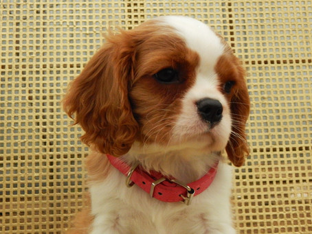 Что НЕЛЬЗЯ делать с маленькими щенками