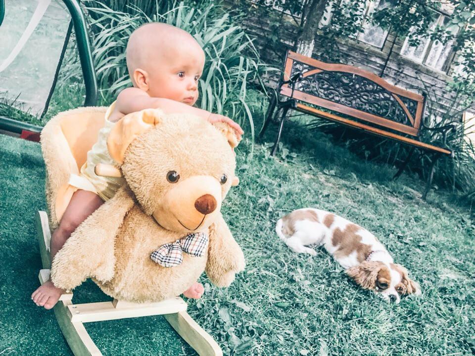 Кавалер Кинг Чарльз спаниель и ребенок