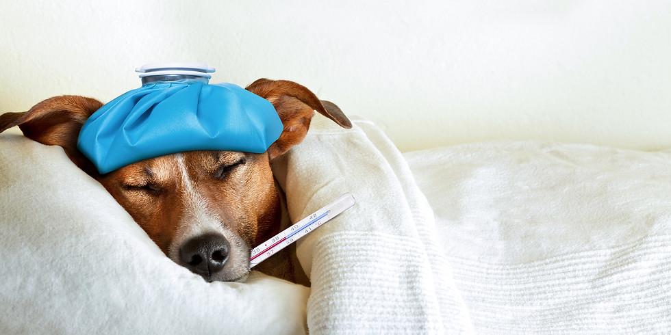 Лекция Юлии Соколовой. Когда нужно обращаться к ветеринару? Как ведет себя заболевшая собака?