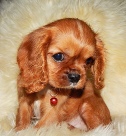 Стихи и статьи о собаках