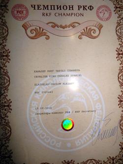 Диплом Чемпион РКФ