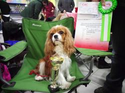 Первая выставка собак