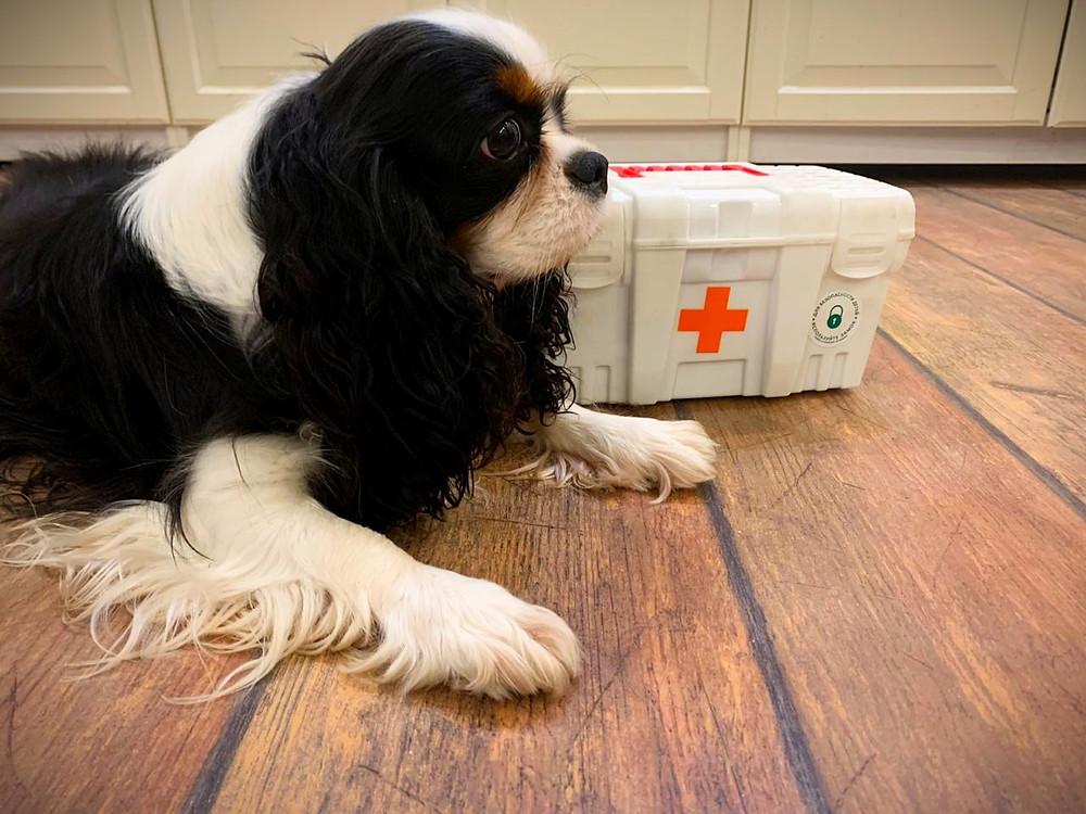 Аптечка для собак