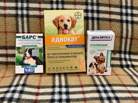 Обработка собак от паразитов