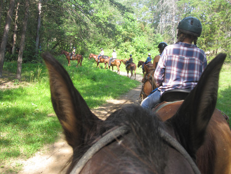 Camp Feature: Horse Camp