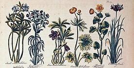 Herbal Supplies Subpage.jpg