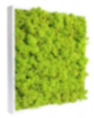 tableau-vegetal-stabilise-lichen-vert-ci