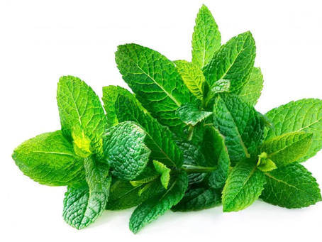 Benefits of Spearmint Tea and Essential Oil