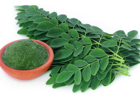 Investigating The Moringa Plant In This COVID19 Season - The Vegetable Became a Wellness Nightmare.