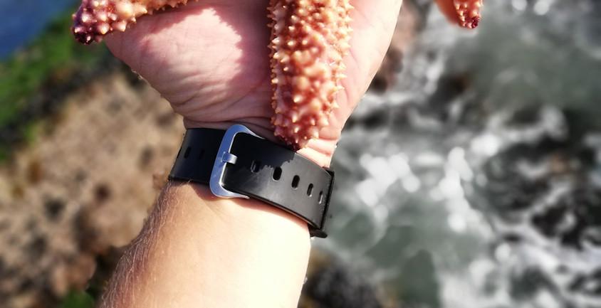 Spiny Starfish - Hermanus