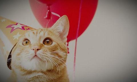 cat holiday_edited_edited.jpg