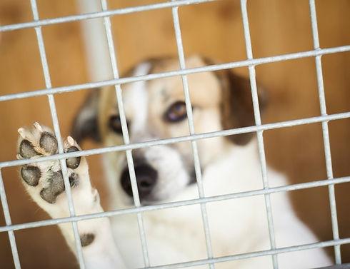 cageddog.jpg