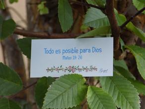 Día 24: Todo es posible para Dios. Mateo 19:26.