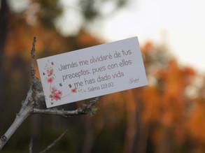 Día 53: Jamás me olvidaré de tus preceptos, pues con ellos me has dado vida. Salmo 119:93