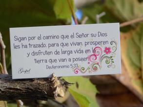 Día 58: Sigan por el camino que el Señor su Dios les ha trazado, para que vivan y prosperen.Det 5:33