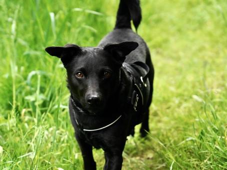 Die Diskussion um die richtige Methode im Hundetraining