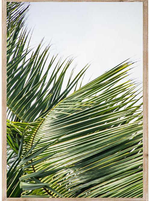 Bright Palm