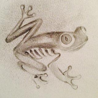 Frog drowing