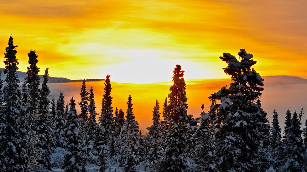 Orange sunrise in the winter fog