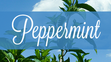 Common Scents: Peppermint