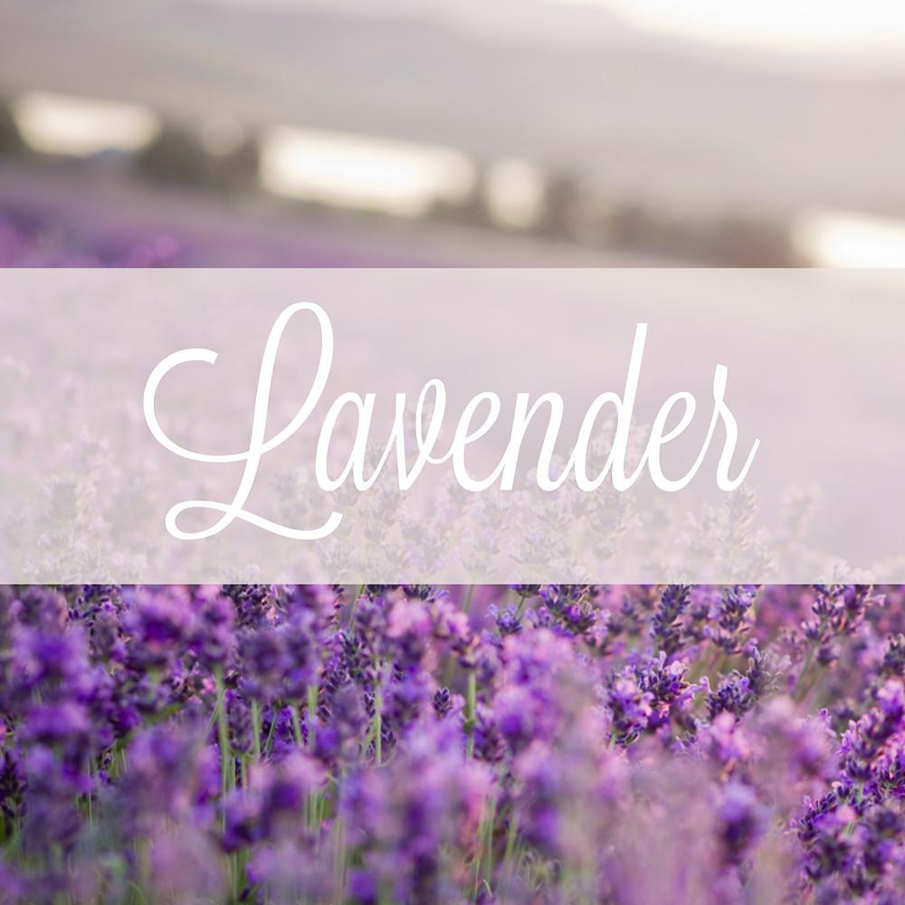 Young Living Lavender Farm