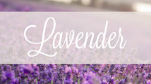 Common Scents: Lavender
