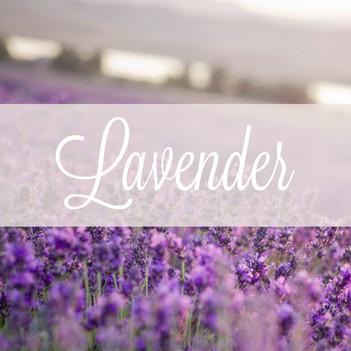 Common Scents: Lavender