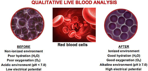 Qualitative Live Blood Analysis