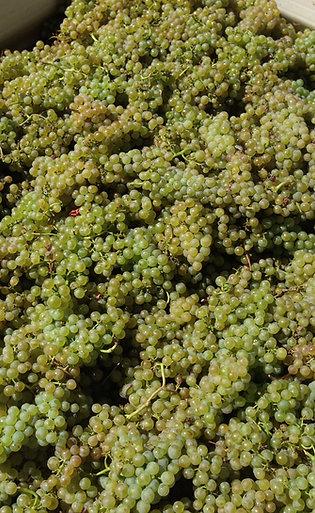 2017 Athletes Of Wine 'Viñero' Romsey Chardonnay