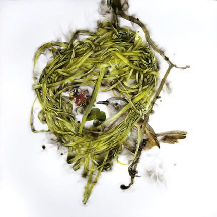 Last Nest