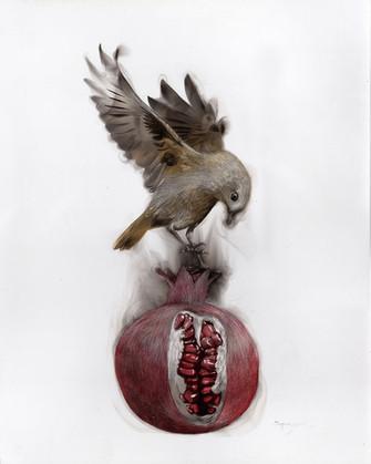 Bird on Pomegrenade