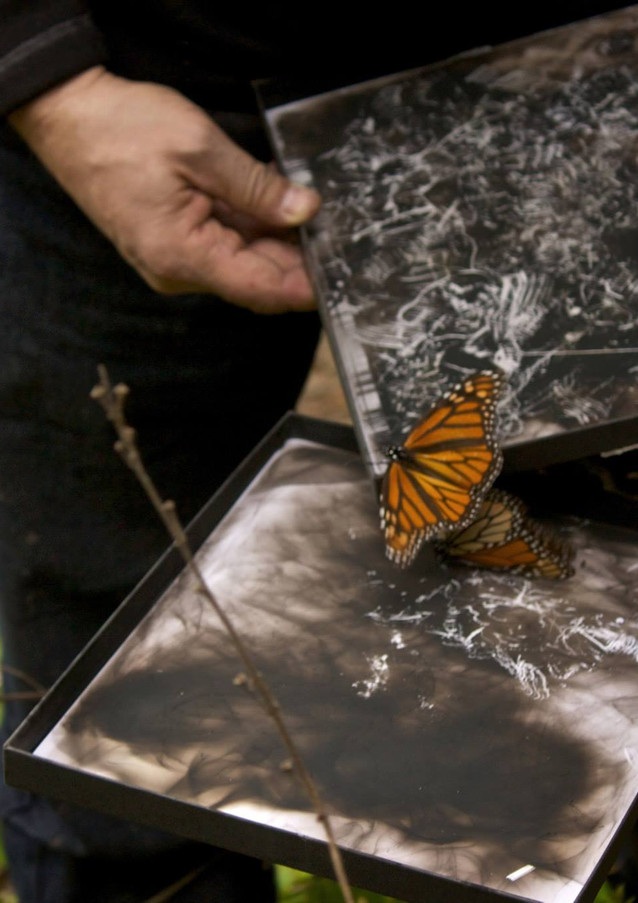 Entomogram in the making (Monarch leaving traces on soot)