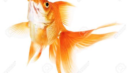 Motivation: Don't be like the Goldfish