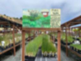 nursery-grasses2.jpg