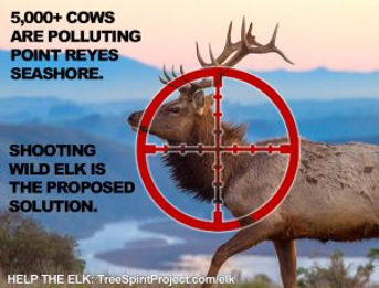 elk-bull-CU-IN-CROSSHAIRS-PRNS-v2020-WEB