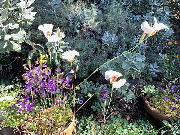 Richmond-native-garden.jpg