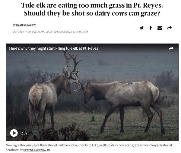 SacBee-tule-elk.jpg.png