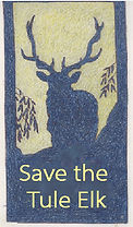 Pint-Reyes-save-the-elk-art.jpeg