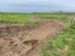 cow-mud2.jpg
