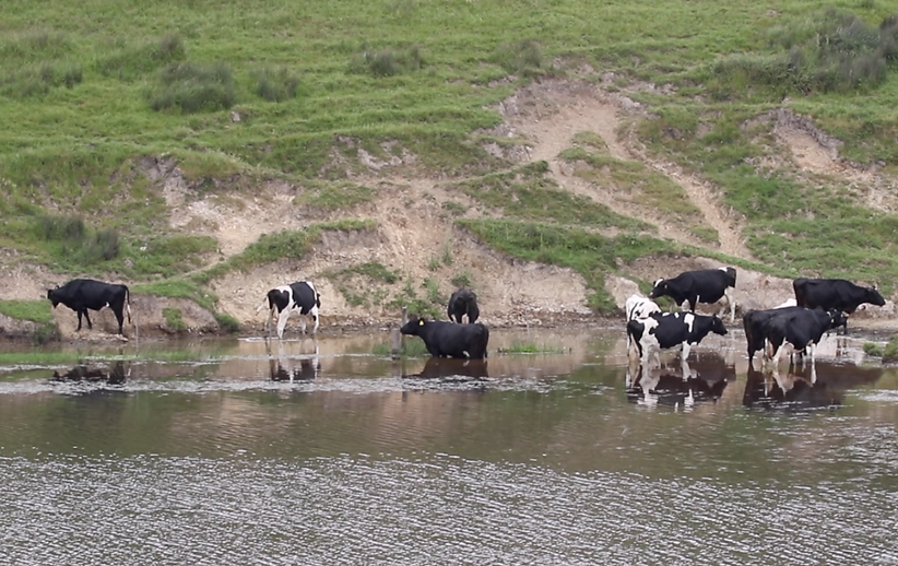 cattle-erosion-pond-Skyler.png