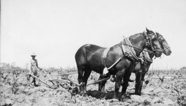 Man with plow Mr. Nitta 1930s