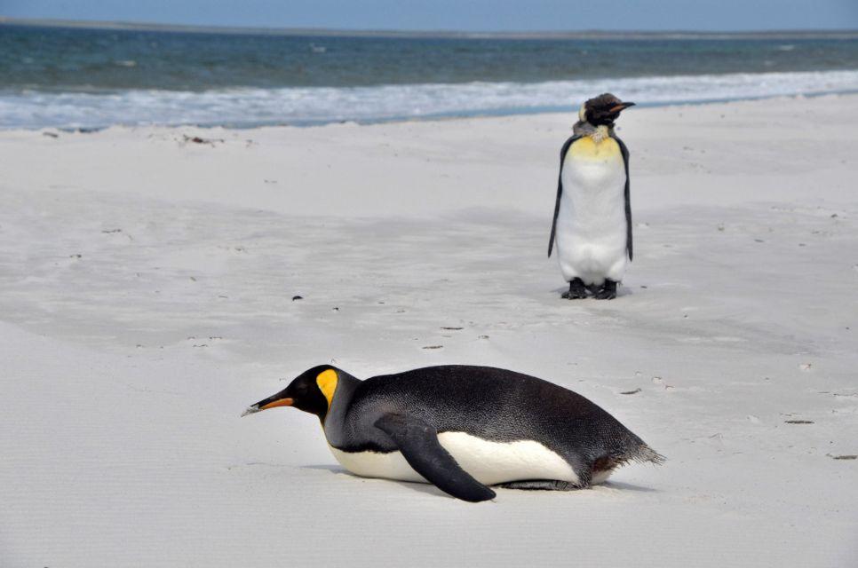 Falkland (33).jpg