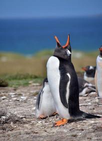Falkland (12).jpg
