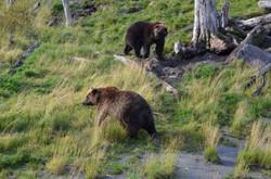 安哥拉治野生動物保護中心