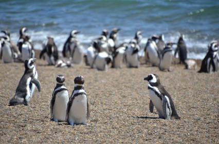 Puerto Madryn (24).jpg
