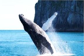 鯨魚冒出水面 - 13 - Skylar.jpg