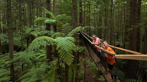 dne-9780_Redwoods_Treewalk_Rotorua.jpg
