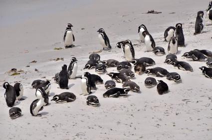 Falkland (94).jpg