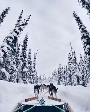 65. 狗拉雪橇3.jpg