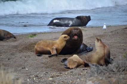 Puerto Madryn (55).jpg